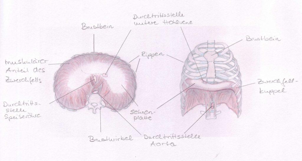 Berühmt Hohlvene Fotos - Menschliche Anatomie Bilder - madeinkibera.com