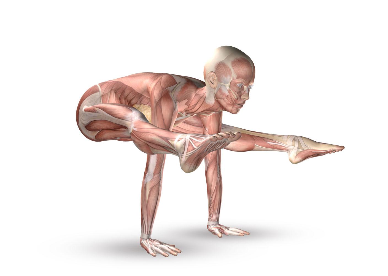 Anatomie im Unterricht - Yoga Aktuell