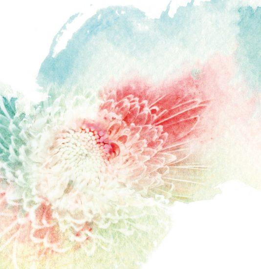 Blume Illustration