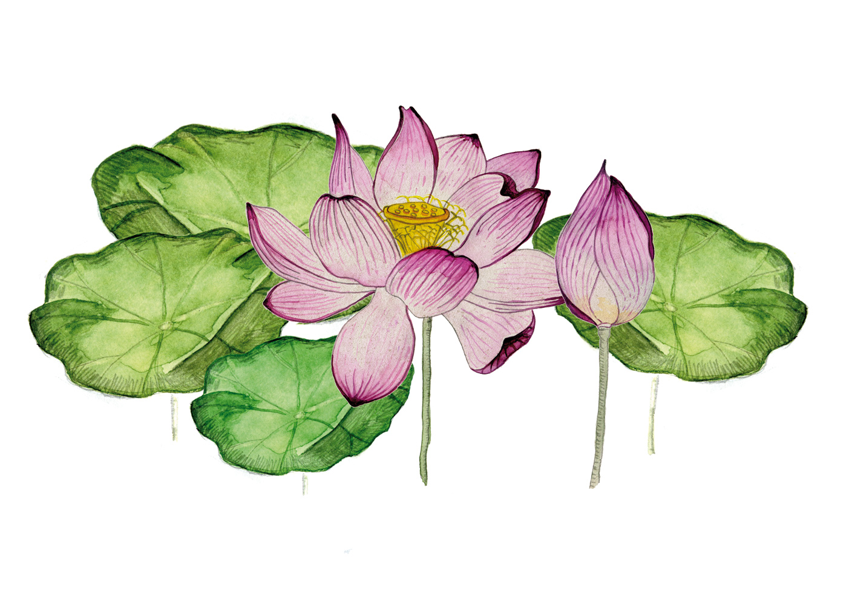 Lotos: Die vielgeschätzte Pflanze - Yoga Aktuell