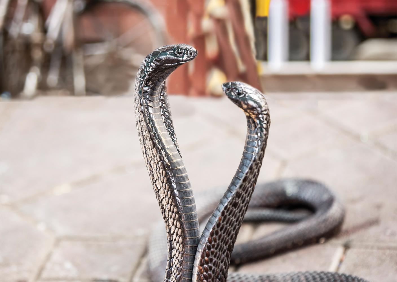 Die Schlange als Krafttier, Heilerin und Schöpferin - Yoga Aktuell