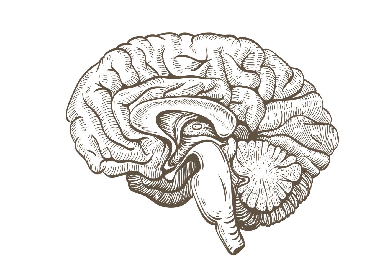 Gehirn und Trauma - Yoga Aktuell