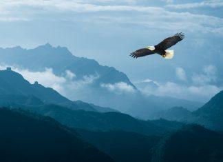 Adler fliegt hoch über den Bergen