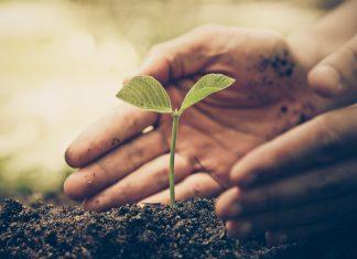 Kleine Pflanze in der Erde