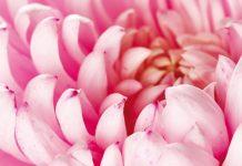 Blumenknospe