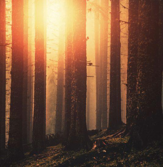 Sonne strahlt durch die Bäume