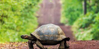 Schildkröte auf einem Waldweg